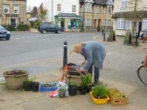 GreenTEA volunteer planting edible herbs in the Square.